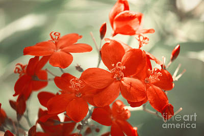 Photograph - Vintage Red Flowers by Jackie Farnsworth