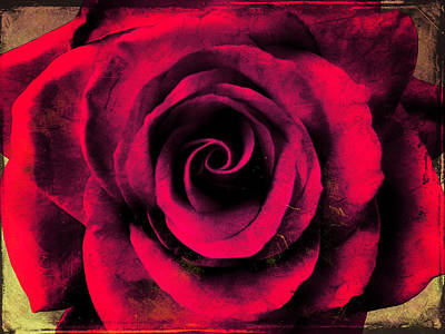 Photograph - Vintage Red Rose by Shawna Rowe