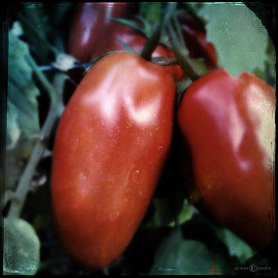 Photograph - Vintage Romas by Tim Nyberg