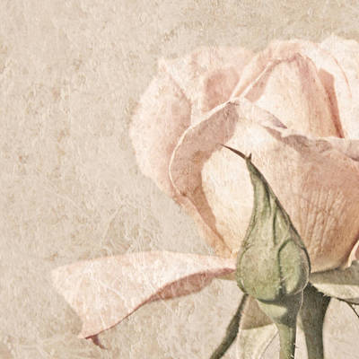 Square Painting - Vintage Rose by Brooke T Ryan