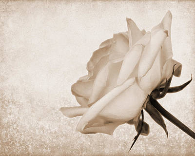 Photograph - Vintage Rose by Judy Vincent