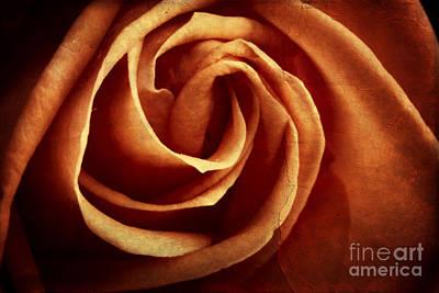 Vintage Rose Print by Mythja  Photography