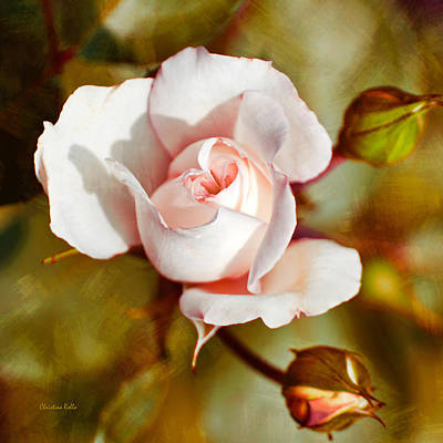 Photograph - Vintage Rose Square by Christina Rollo
