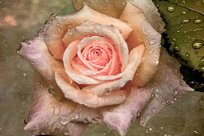 Photograph - Vintage Rose With Water Drops by Ludmila Nayvelt