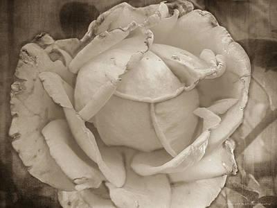 Vintage Rose Art Print by Yvon van der Wijk