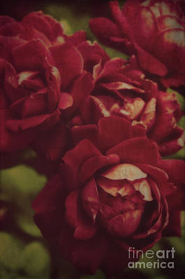 Photograph - Vintage Roses by Debra Fedchin