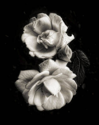 Photograph - Vintage Roses In Antique Tones by Louise Kumpf
