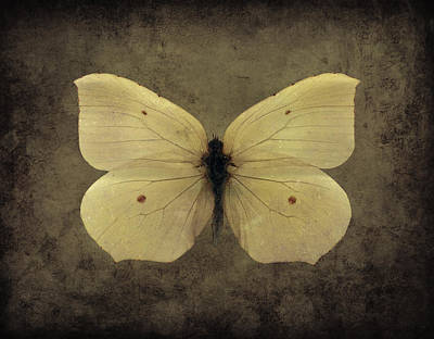 Digital Art - Butterfly 3 by Steve Ball