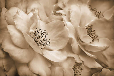 Whats Your Sign - Vintage Sepia Roses  by Jennie Marie Schell