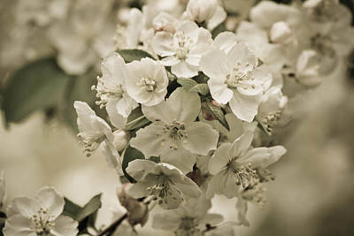 Photograph - Vintage Spring by Julie Andel