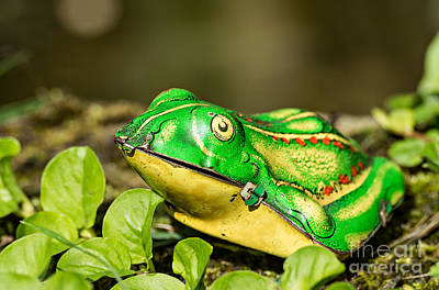 Vintage Tin Toy Frog Sitting In The Grass Art Print by Palatia Photo