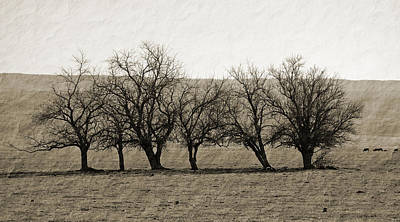 Photograph - Vintage Trees by Holly Blunkall