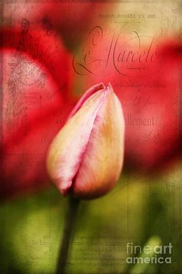 Vintage Tulip Art Print by Darren Fisher