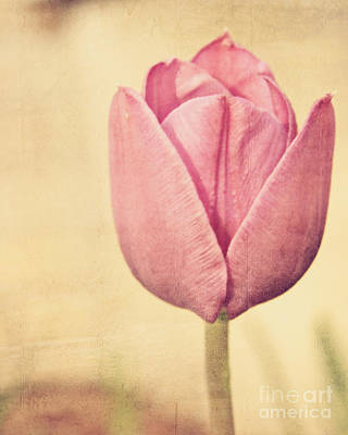 Photograph - Vintage Tulip by Emily Kelley