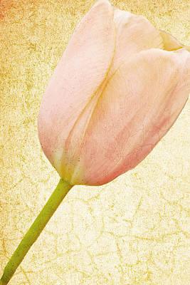 Vintage Tulip Art Print by Lesley Rigg