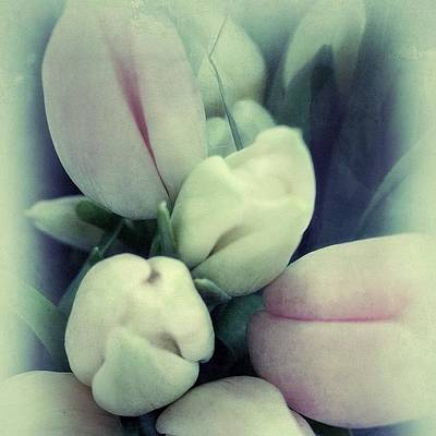 Photograph - Vintage Tulips by Kathleen Messmer