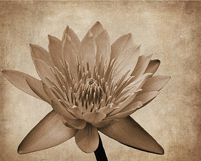 Photograph - Vintage Waterlily by Judy Vincent