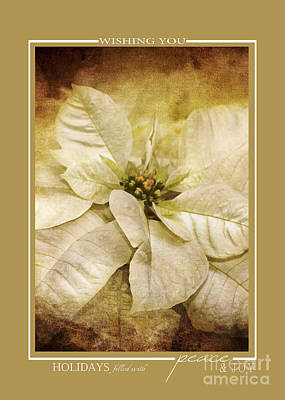 Photograph - Vintage White Poinsettia Flower Christmas Cards by Jai Johnson