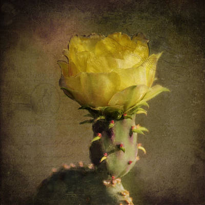 Photograph - Vintage Yellow Cactus by Sandra Selle Rodriguez