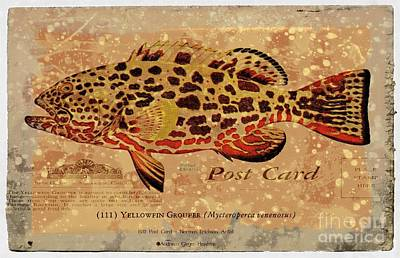 Photograph - Vintage Yellowfin Grouper Postcard by Audreen Gieger