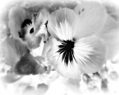 Photograph - Viola Black And White by Ioanna Papanikolaou