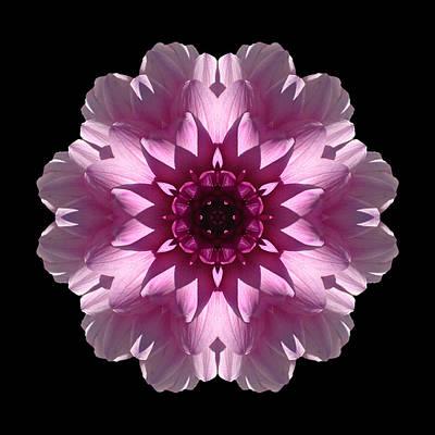 Photograph - Violet And White Dahlia I Flower Mandala by David J Bookbinder