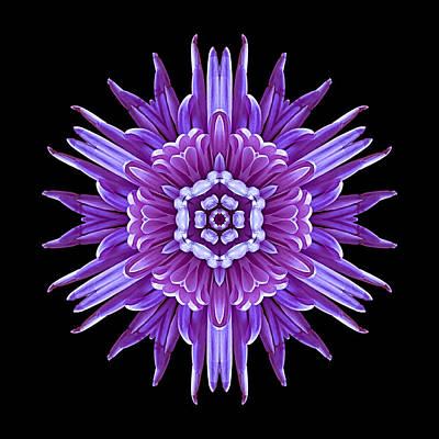 Violet Chrysanthemum Iv Flower Mandala Art Print by David J Bookbinder