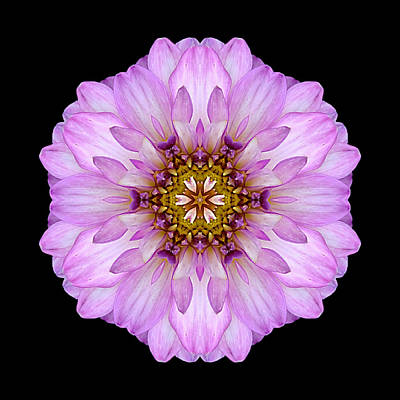 Photograph - Violet Dahlia II Flower Mandala by David J Bookbinder