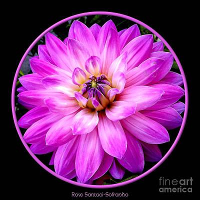 Bud Photograph - Violet Dahlia by Rose Santuci-Sofranko