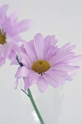 Photograph - Violet Daisies by Frederic BONNEAU Photography