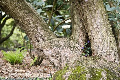Tree Photograph - Violet Flowerpot by Priya Ghose