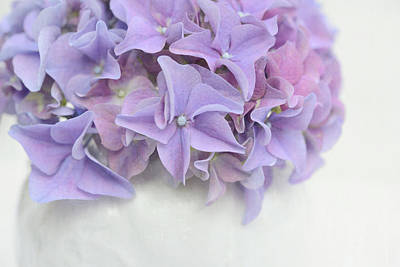 Violet Hydrangea Art Print by Cora Niele
