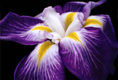 Digital Art - Violet Iris by Bruce Rolff