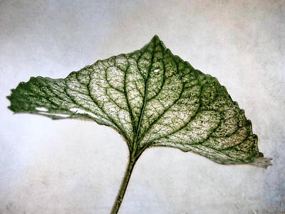 Photograph - Violet Leaf by Louise Kumpf