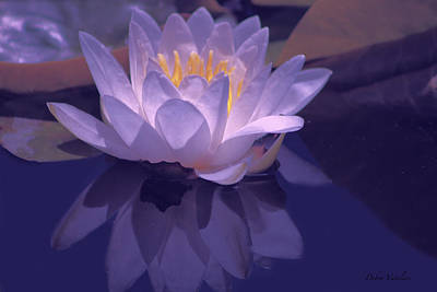Photograph - Violet Lotus Bliss by Debra     Vatalaro