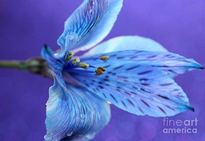 Blue Flowers Photograph - Violet Nature by Krissy Katsimbras