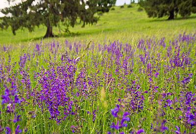 Mind Blowing Photograph - Violet-purple Wild Flowers by Cristina-Velina Ion
