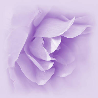 Photograph - Violet Rose Flower Tranquillity  by Jennie Marie Schell