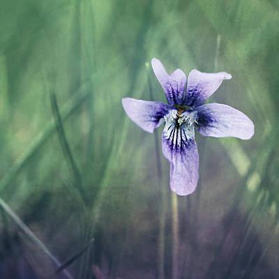 Flower Still Life Mixed Media - Violet Still Life by Heike Hultsch