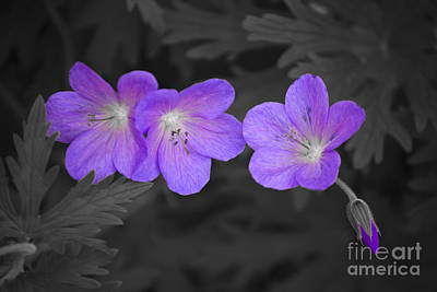 Photograph - Violet Vibe by Susan Parish