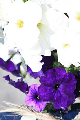 Photograph - Violet White Flowers by Phoenix De Vries