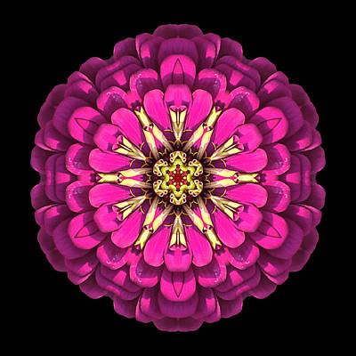 Photograph - Violet Zinnia Elegans Flower Mandala by David J Bookbinder