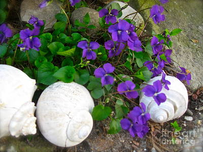 Photograph - Violets And Seashells  by Nancy Patterson