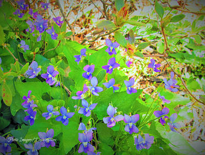 Photograph - Violets by Debbie Sikes