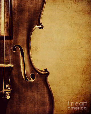 Violins Photograph - Violin Portrait  by Emily Kay