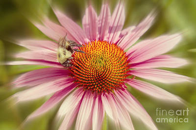 Photograph - Vip Very Important Pollinator by Chris Scroggins