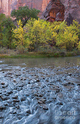 Virgin River In Fall - Zion Art Print by Sandra Bronstein