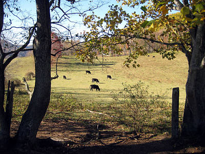 Photograph - Virginia Cattle by Rick Carbonell