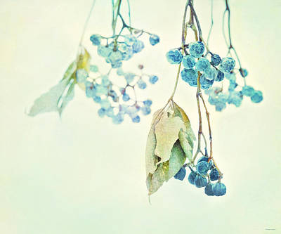 Virginia Creeper Berries Art Print by Theresa Tahara