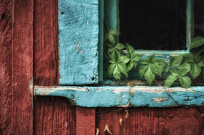Photograph - Virginia Creeper by James Barber
